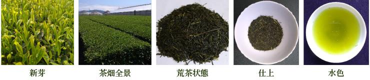 ごこう【新芽・茶畑全景・荒茶状態・仕上・水色】