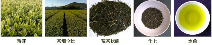 こまかげ【新芽・茶畑全景・荒茶状態・仕上・水色】