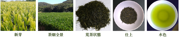 さやまかおり【新芽・茶畑全景・荒茶状態・仕上・水色】