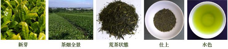 やまかい【新芽・茶畑全景・荒茶状態・仕上・水色】