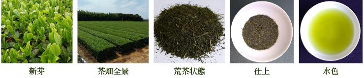 ゆたかみどり【新芽・茶畑全景・荒茶状態・仕上・水色】